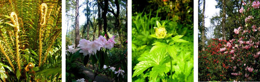 Eugene Foliage