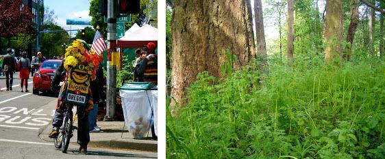 Eugene Oregon Bike and Foliage