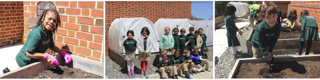 Alexandria Country Day School Gardening